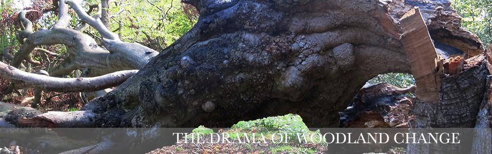 dramawood