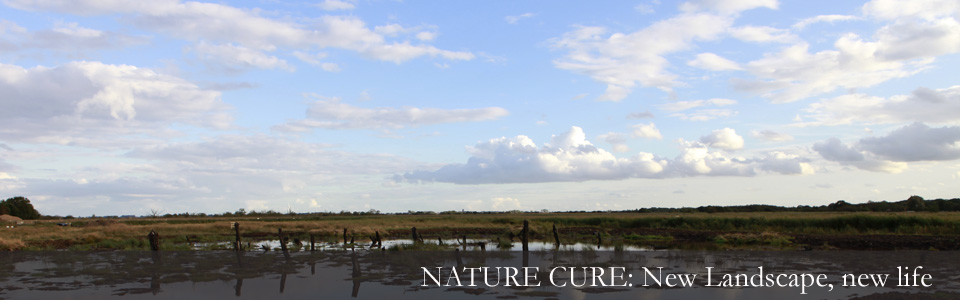 Richard Mabey Nature Cure - banner