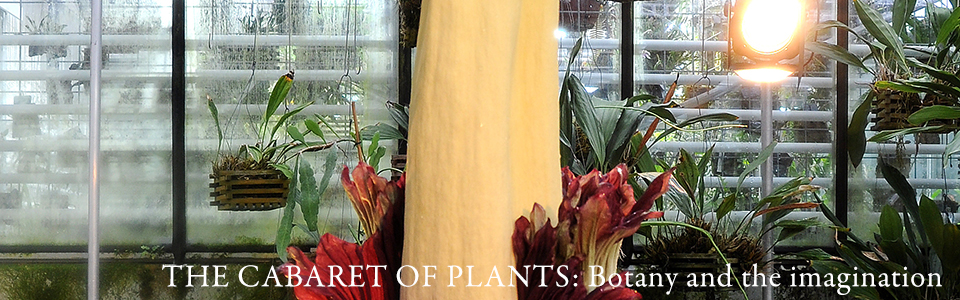 the cabaret of plants banner image
